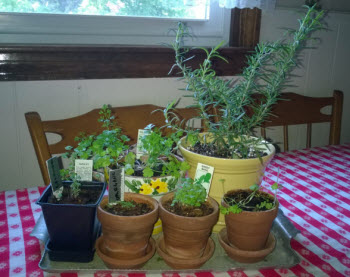 Herb Garden Inside