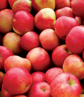 apples bushel
